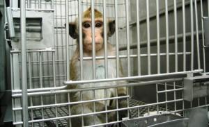 laboratorio-animales