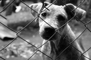 perro_abandonado