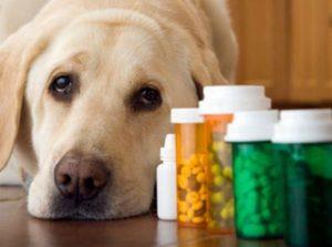 medicamentos_genericos_animais1